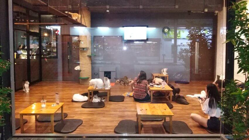 Het kattencafé van Chiang Rai, Thailand