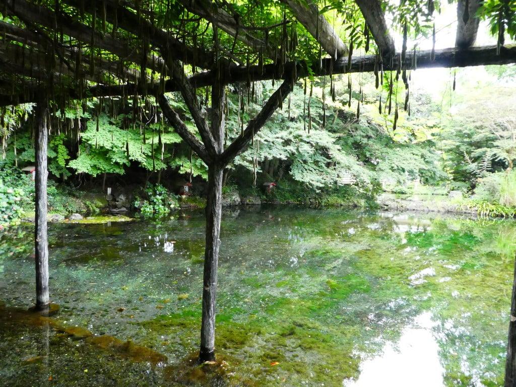 Wakutama Pond, Fujinomiya
