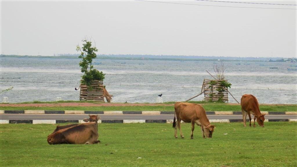De stad Jaffna in het noorden van Sri Lanka