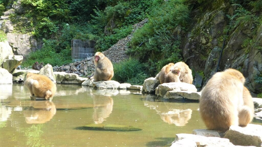 Japanse makaken en onsen in Japan