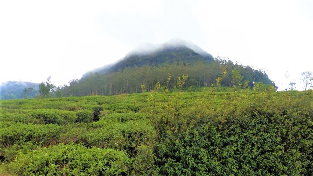 De hoogste berg van Sri Lanka, de Pidurutalagala