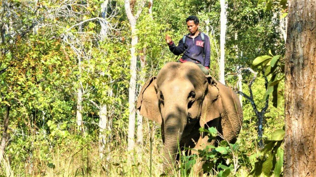 Een olifant en zijn mahout, Cambodja