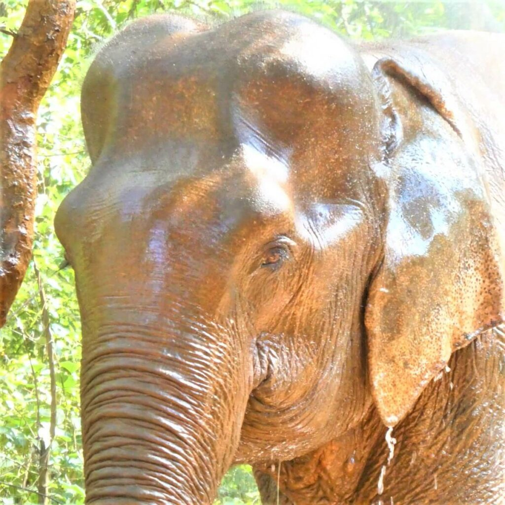 Sambo de olifant in het Elephant Valley Project