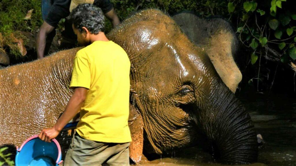 Het Elephant Valley Project in Sen Monorom