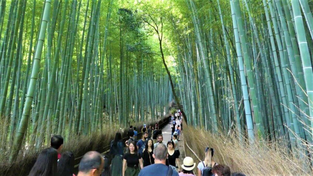 Het bamboebos van Arashiyama ten westen van de stad