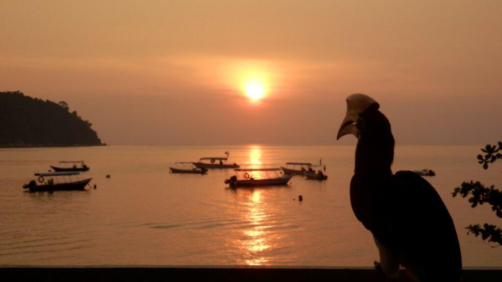 Neushoornvogel in Maleisië