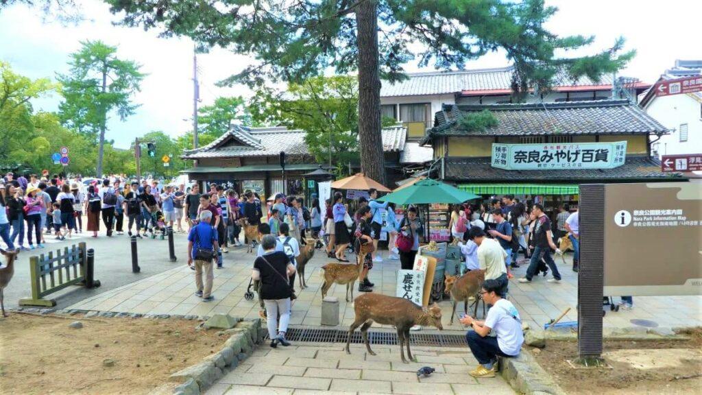 De hertjes in het park van Nara in Japan