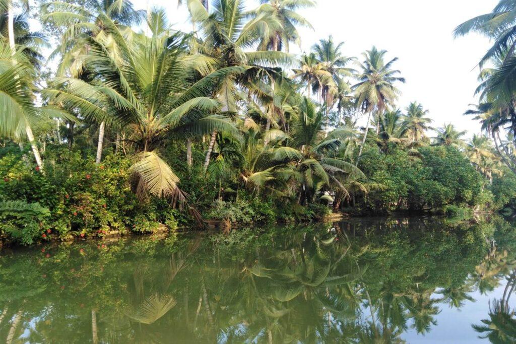 Kanalen en palmbomen in Kerala India