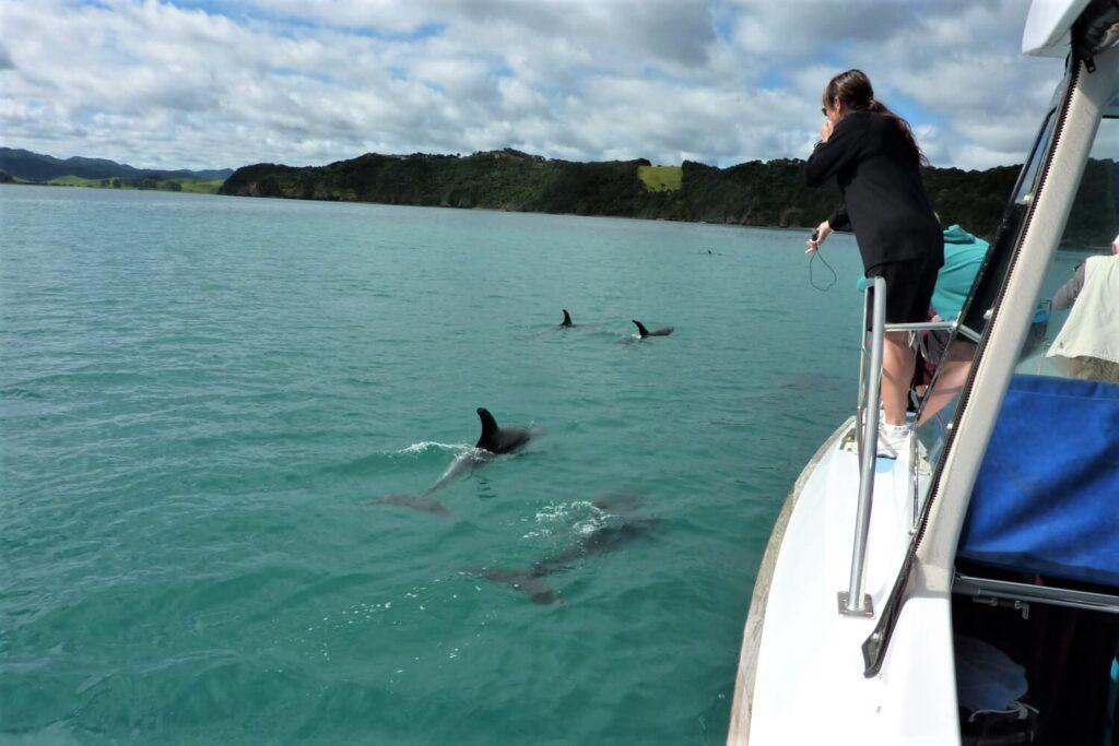 Zwemmen met dolfijnen in de Bay of Islands, Nieuw-Zeeland